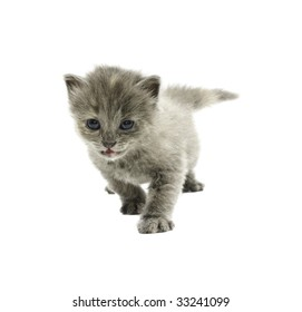 small kitten isolated on white background