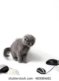 Small kitten looking at computer mice
