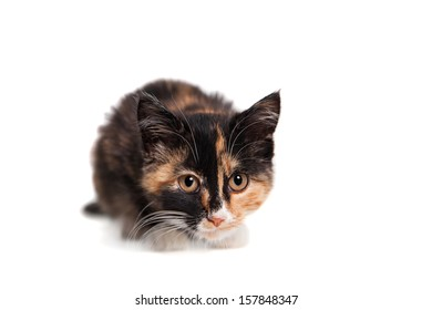Small kitten on the white background