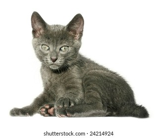 Small kitten on a white background.