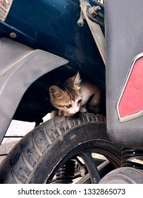 a small kitten playing at bike tyre gap