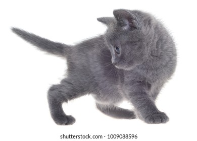 Small kitten playing isolated on a white background