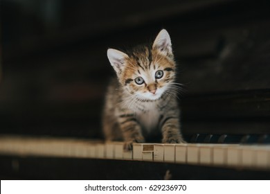 Small kitten sitting on keys of the piano.