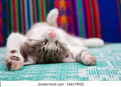 Small kitten sleeping on the bed