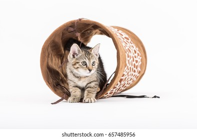 Small kitten with tunnel