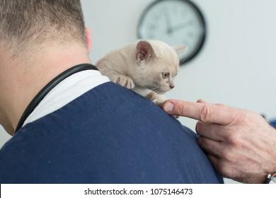 small kitten at the vet