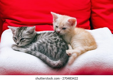 Small kittens are going to sleep on a soft blanket