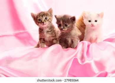 Small kittens on pink background