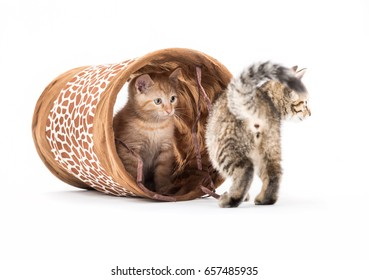 Small kittens with tunnel