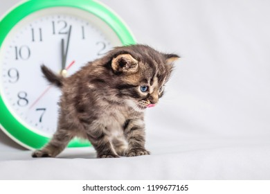A small kitty near the clock, which shows that the new year has come