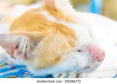 Small Kitty sleeping on wood bed, Close up kiten sleeping