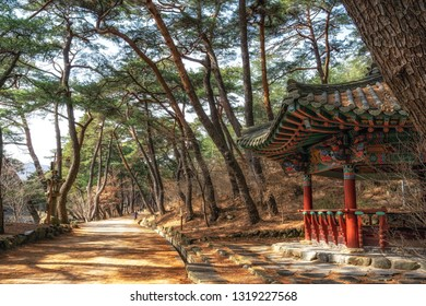 A small Korean pagoda pavilion and pine tree forest grove at mupunghansong gil road near the entrance of Tongdosa temple in South Korea. Taken in the morning