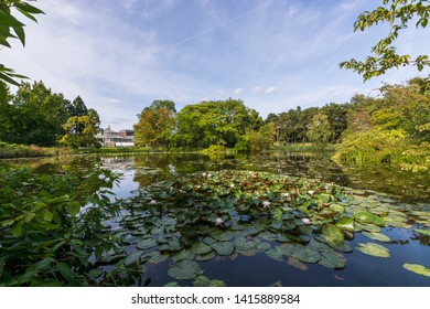 Small lake covered of waterlilies,  inside the botanical garden of Copenaghen, Danmark, North Europe.