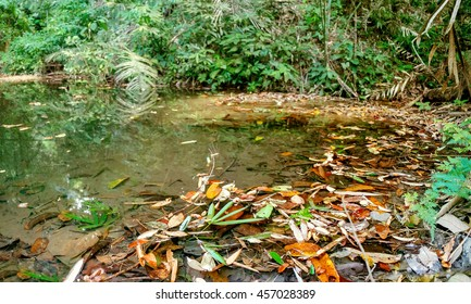 Small lake with fallen leaves in the jungles, Khao Sok National Park, Surat Thani Province, Thailand.