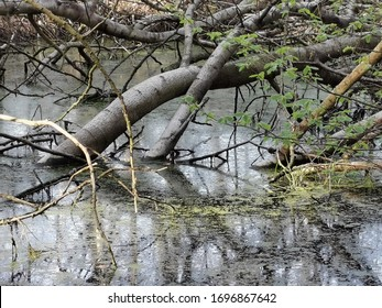 small lake in forest with fallen trees and reflection