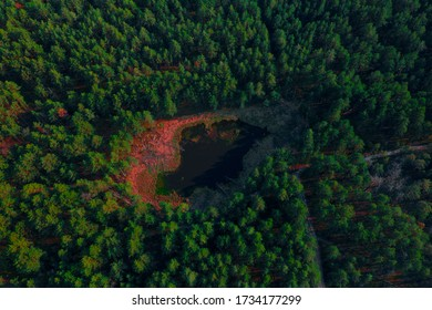 Small lake with pink acid shore in green forest shotted from drone