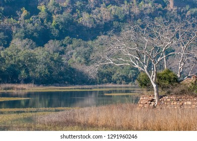 Small lake in Ranthambore National Park in Rajasthan, India