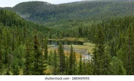 small lake sourrounded by fir tree forest in Swedish mountains - Shutterstock ID 1883459593