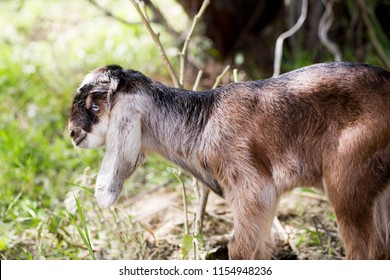 a small lamb is in rural