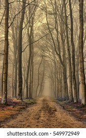 Small lane in scenic foggy landscape with trees