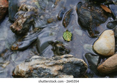 Small leaf in a cold stream