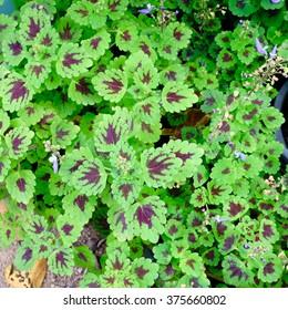 Small Leaf Plant