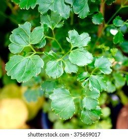 Small Leaf Plants