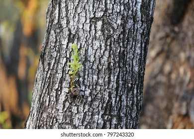 small leave on the big trunk