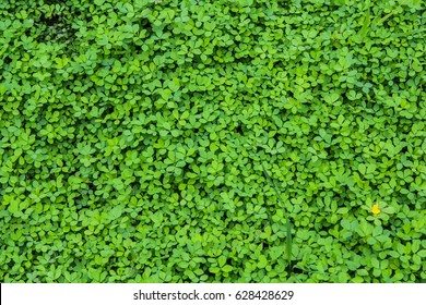 small leaves background