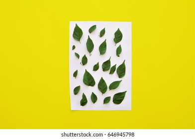 small leaves on white portrait paper.