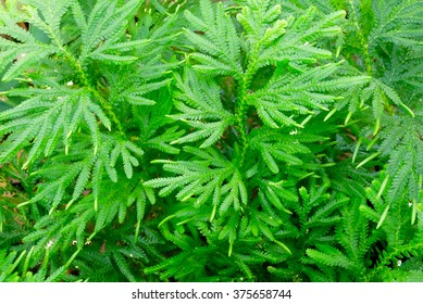 Small Leaves Plants