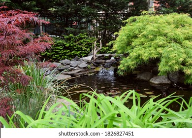Small lily pond in Jefferson Market Garden, New York City. Water flows down a rock waterfall among Japanese maples and lush shrubbery in the urban garden.