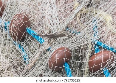 Small lizard lying on a fishing net in Guadeloupe