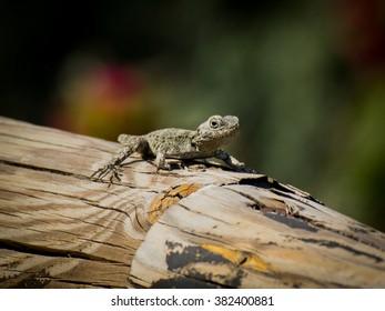 Small lizard on the log