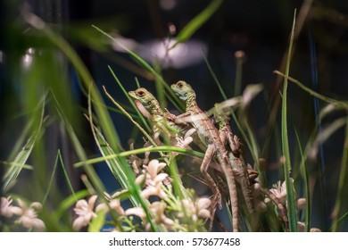 Lizard Terrarium Images Stock Photos Vectors Shutterstock