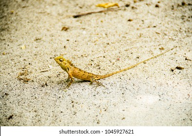 Small lizzard on a beach