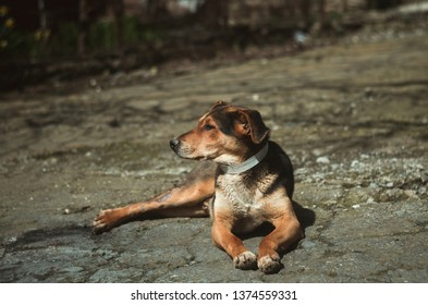 Small lonely dog outdoors