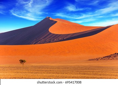Small lonely tree in a vast desert. Orange, purple and yellow dunes of the Namib desert. The concept of extreme and exotic tourism. Namibia, South Africa