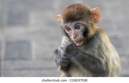 Small macaque at the zoo