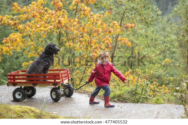 Small male child pulling his pet dog in a wooden wagon up a hill in the rain with autumn leaves in the background.