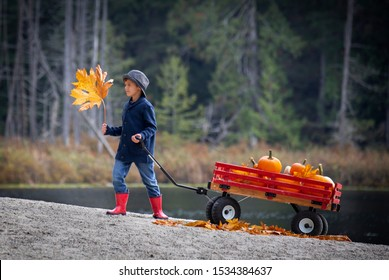 Small male child pulling a red wooden wagon filled with orange pumpkins.