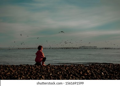 Small male child sitting on a rocky beach with birds flying over the water.