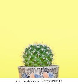 Small mammillaria cactus in a small decorative ceramic planter.