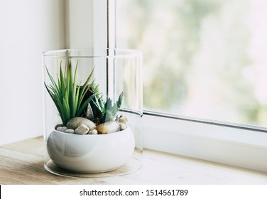 Small modern tabletop glass open terrarium for plants on window sill in natural light. Lot of copy space. Selective focus and blur bokeh background.