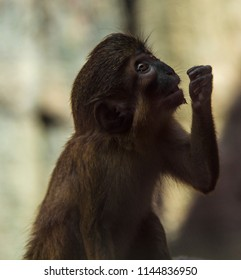 Small Monkey with arm up