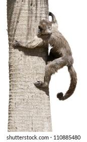 a small monkey climbed a tree branch