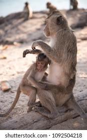 Small monkey grabs his mother on the beach at the Monkey Island, Pattaya Chonburi