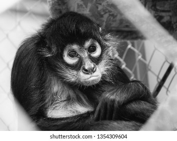Small Monkey Looking Miserable Trapped in a Cage