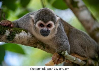 small monkey tropical rainforest ecuador