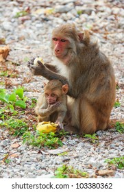 A small monkeys sitting and eating